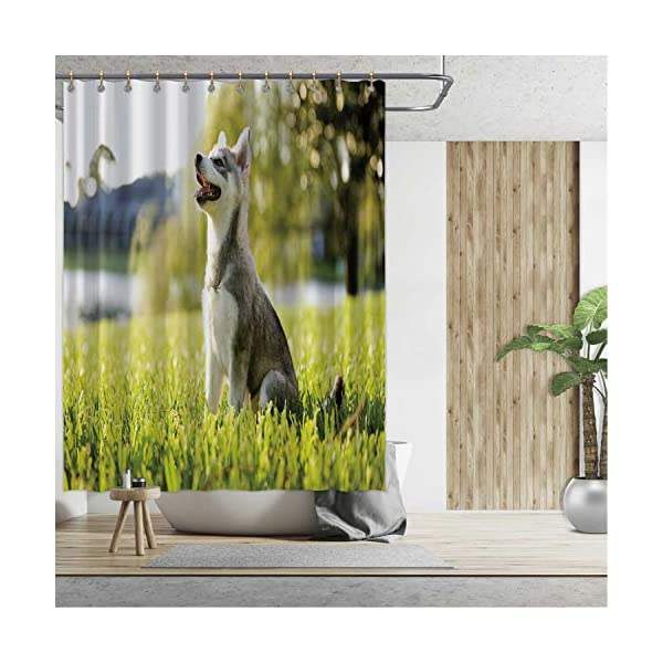 Alaskan Malamute Bath Curtains Shower,Klee Kai Puppy Sitting on Grass Looking Up Friendly Young Cute Animal DShower Curtainsrative for Home,59''W x 71''H 2