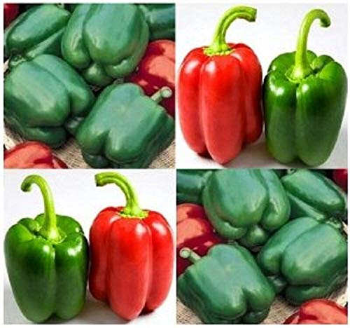NonGMO Heirloom YOLO Wonder Sweet Bell Pepper 200 Seeds Large Fruits Combine S/H