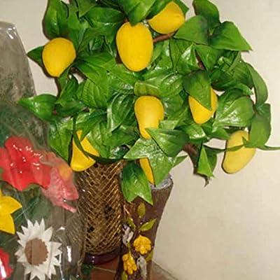 HOTUEEN Tropical Mango Seeds Perennial Bonsai Outdoor Plant Seeds Fruits : Garden & Outdoor