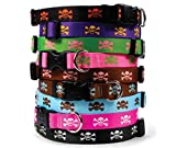 Skull & Crossbones Dog Collar - Black with Orange - Small 10 to 14 inch - with Tag-A-Long ID Tag System