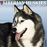 Just Siberian Huskies 2018 Wall Calendar (Dog Breed Calendar)
