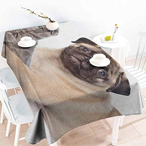 EwaskyOnline Spill-Proof Table Cover,Pug Cute Young Pets Kitten