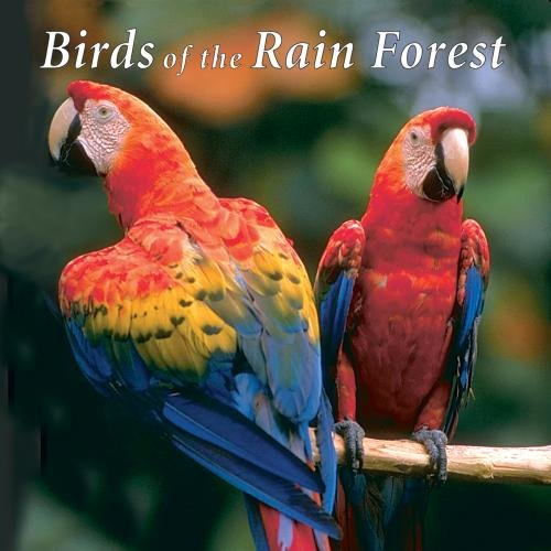 birds-of-the-rain-forest
