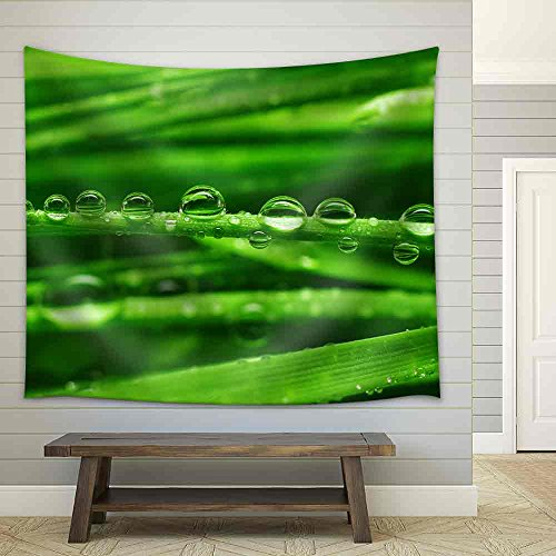 Fresh Green Grass with Water Drops Close Up Fabric Wall