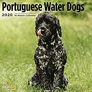 2020 Portugese Water Dogs Wall Calendar by Bright Day, 16 Month 12 x 12 Inch, Cute Dogs Puppy Animals Adorable Canine 1