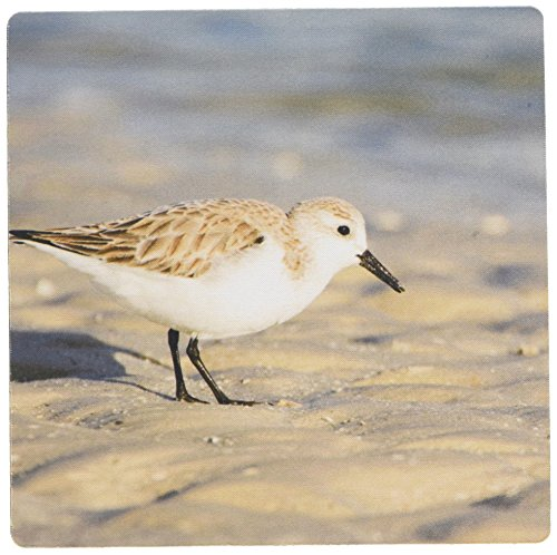 3drose-llc-8-x-8-x-025-inches-mouse-pad-florida-ft-myers-beach-sanderling-bird-rob-tilley-mp-89276-1