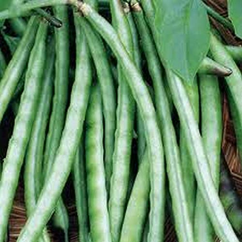 50 Seeds Colossus Cowpea