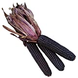 Burpee Suntava Full Season Purple Sweet Corn Seeds 300 seeds