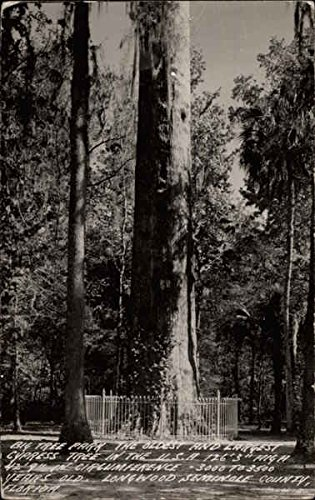 Big Tree Park Longwood, Florida Original Vintage Postcard