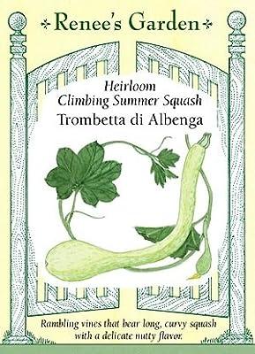 Squash - Climbing Trombetta Seeds
