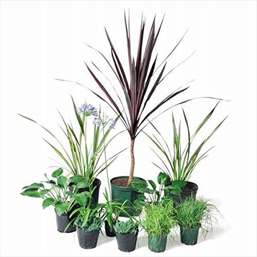オンリーワン 彩で選ぶ 植栽セット カラー コルディリネ 5感で選べるセット UN6-SET16 B01D1LUMA2