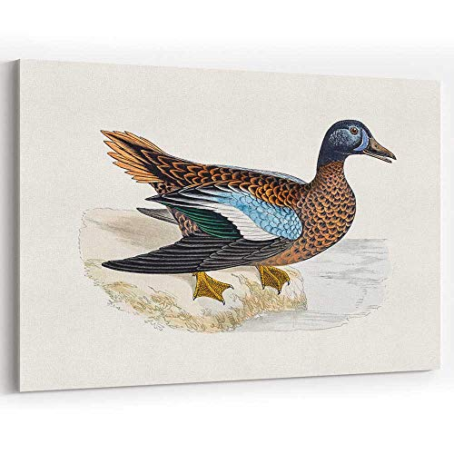 (Actorstion Blue Winged Teal Duck Waterfowl Bird Canvas Art Wall Dcor for Modern Home Decor)