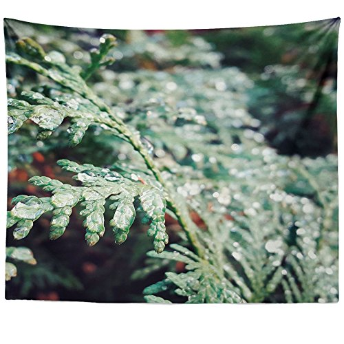 Westlake Art - Plant Fir - Wall Hanging Tapestry - Picture Photography Artwork Home Decor Living Room - 68x80 Inch (FDFCF) -