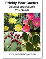 Prickly Pear Cactus Mix (Opuntia) 25+ Seeds, 250, 1000 Seed Quantity Options