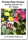 Prickly Pear Cactus Mix (Opuntia) 25+ Seeds, 250, 1000 seed quantity options (25 Seeds)