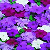 Outsidepride Impatiens Blues Mix - 100 Seeds