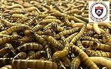 Farm Fresh Feeders 1000 Large Superworms - ORGANICALLY RAISED
