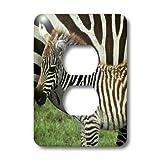 3dRose LLC lsp_9859_6 Common Zebra Kenya Africa 2 Plug Outlet Cover