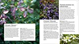 The Plant Lover's Guide to Clematis
