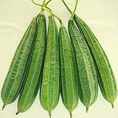 Ridge Gourd Seeds (avg 50-100) Seeds 6 : Garden & Outdoor