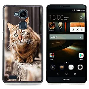House Cat Shorthair British Street Furry Caja protectora de pl??stico duro Dise?¡Àado King Case For HUAWEI Ascend Mate 7