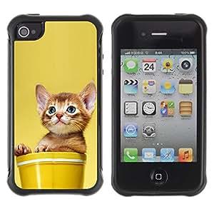 Suave TPU GEL Carcasa Funda Silicona Blando Estuche Caso de protección (para) Apple Iphone 4 / 4S / CECELL Phone case / / Cute Cat Kitten In A Pot /