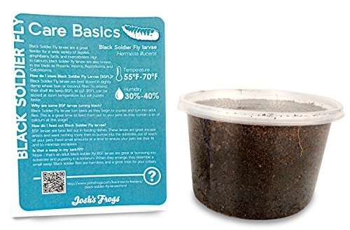 Black Soldier Fly Larvae (1000 Count - Medium)