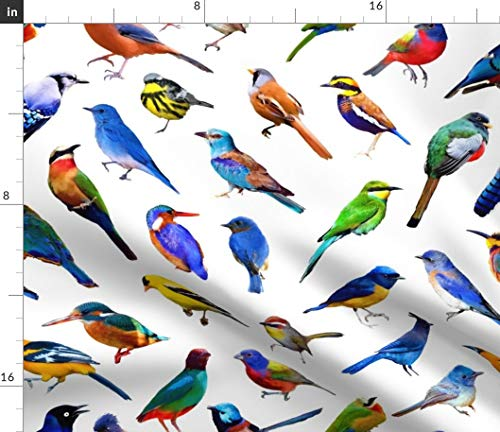 Heavyweight Spandex Tights - Spoonflower Bird Fabric - Brilliant Birds Rainbow Colorful Tropical Jungle On White Childrens Designer Print on Fabric by The Yard - Denim for Sewing Bottomweight Apparel Home Decor Upholstery