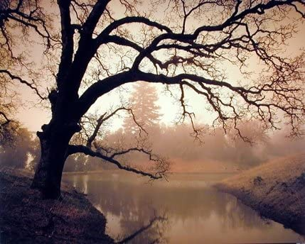 16x20 Golden Sunset Pond and Tree Landscape Nature Wall Art Print Poster
