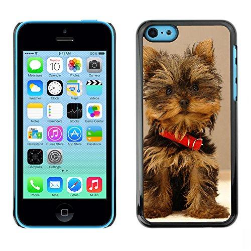 Omega Case PC Polycarbonate Cas Coque Drapeau - Apple iPhone 5C ( Cute Yorki Yorkie Terrier Dog )