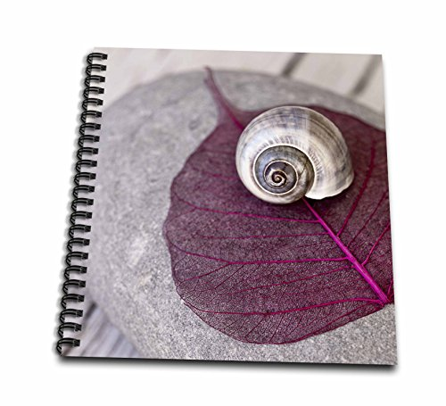 3dRose Andrea Haase Nature Photography - Shell and Pink Leaf on Pebble - Drawing Book 8 x 8 inch (db_274832_1)