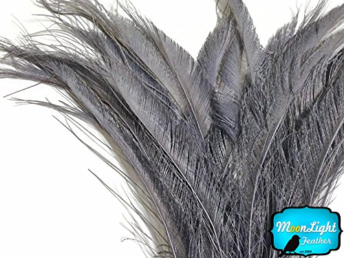 Project M All Special Costumes (Peacock Feathers 50 Pieces Silver Grey Bleached Peacock Swords Cut Wholesale Feathers)