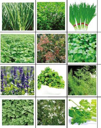 golden autumn farm - ORGANIC NON-GMO Culinary Herb Set - 12 popular Easy-to-Grow Herb Seeds