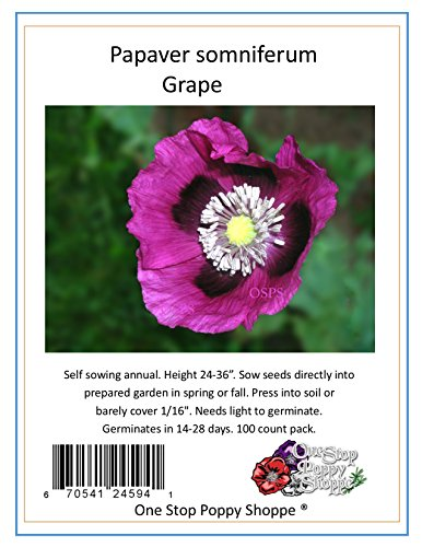Poppy 100 Seeds - 100 Poppy Flower Seeds. Grape Poppies. Papaver somniferum. One Stop Poppy Shoppe® Brand.