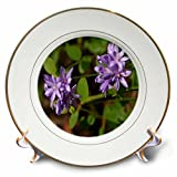 3dRose TDSwhite – Summer Seasonal Nature Photos - Floral Twin Blue Brodea Flowers - 8 inch Porcelain Plate (cp_284513_1)