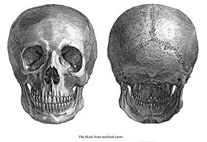 32c0b31bf3347 ml39 Vintage Medical Ilustración de anatomía cuerpo humano anatómico Sketch  Póster