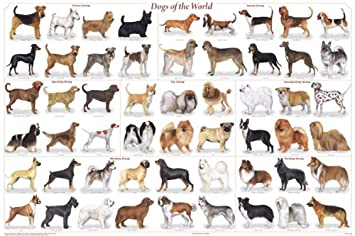 Amazon Com Dogs Of The World Popular Breeds Chart Poster 36 X 24