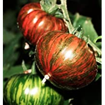 Organic Chocolate Stripes Heirloom Tomato Seeds - Large Tomato - One of the Most Delicious Tomatoes for Home Growing, Non GMO - Neonicotinoid-Free.