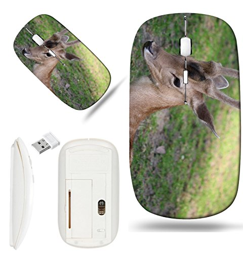 (Luxlady Wireless Mouse White Base Travel 2.4G Wireless Mice with USB Receiver, 1000 DPI for notebook, pc, laptop,mac design IMAGE ID: 34264298 Young male roe deer laying on the grass)