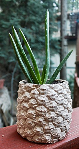 Pineapple Planter - 6