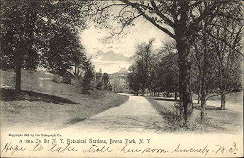 In the Botanical Gardens, Bronx Park New York, New York Original Vintage Postcard