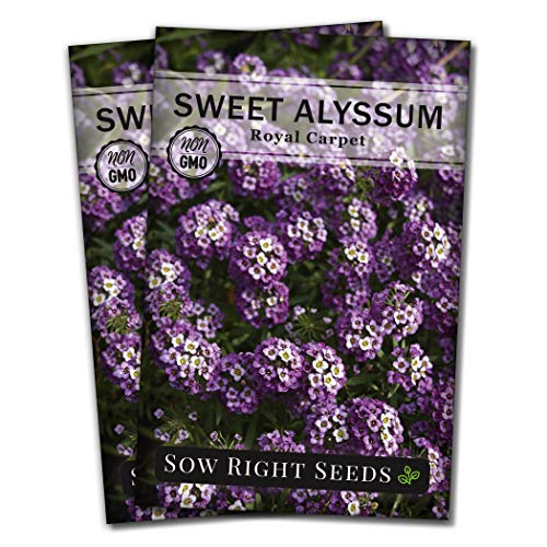 Sow Right Seeds  Sweet Alyssum Flower Seeds for Planting Beautiful Flowers to Plant in Your Garden NonGMO Heirloom Seeds Wonderful Gardening Gifts 2