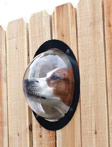 dog fence window