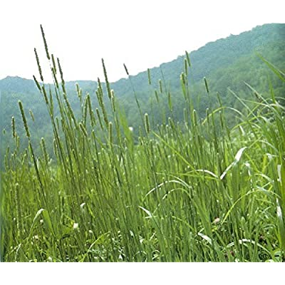 Climax Timothy Seed 1 lb Bags : Garden & Outdoor