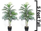 5 Ft Palm Tree Golden Cane Areca Silk Green ( 2 Pack ) Indoor Decor