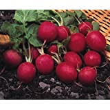 Just Seed - Vegetable - Radish - Cherry Belle - 400 Seeds - Economy Pack