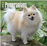 Pomeranians 2015 Square 12x12 (Multilingual Edition)
