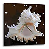 3dRose dpp_4384_3 Sea Shell Wall Clock, 15 by 15