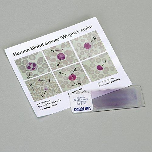 Human Blood Self Study Microscope Slide product image