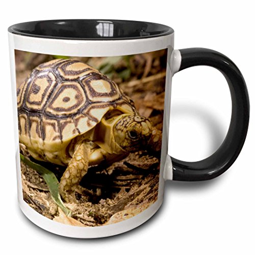 (3dRose 94197_4 Leopard Tortoise, Kenya Joe And Mary Ann Mcdonald Two Tone Black Mug 11 oz White)